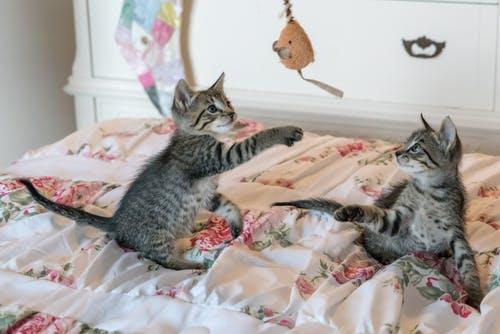 juegos para jugar con tu gato